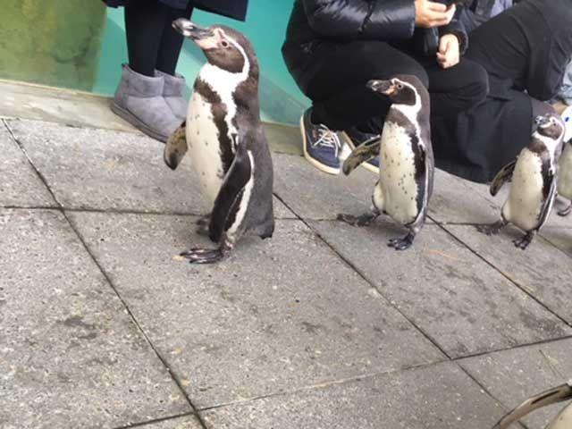 休日は城崎マリンワールドでペンギン行進見て癒されて下さい。