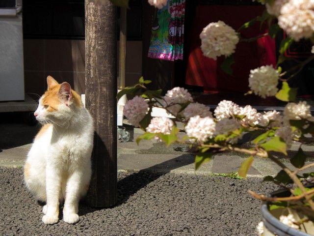 猫も箱根でまってま〜す☆