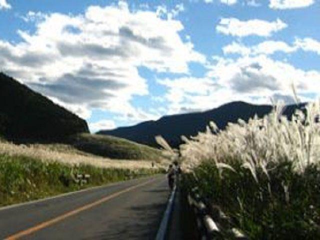 仙石原と言えばススキが有名ですよね。周辺に観光名所がたくさん♪