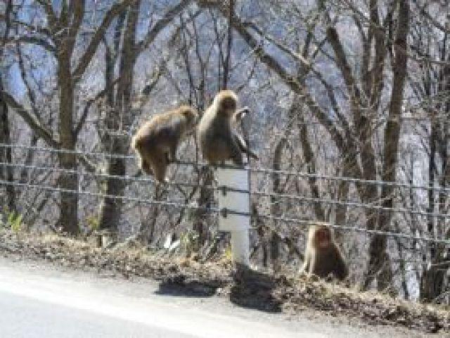街中に野生動物も多く出現します!