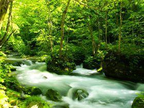夏は新緑、秋は紅葉といつきても楽しめる奥入瀬渓流。お休みの日は渓流散策でリフレッシュ♪