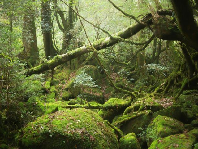 自然あふれる屋久島!もののけ姫の舞台になった場所です☆