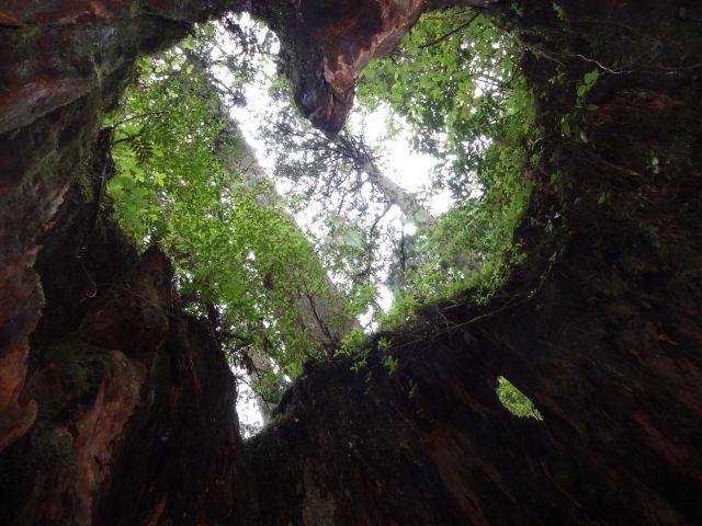 女性は特に必見!!木の中から上を見ると、なんとハード型が!!!