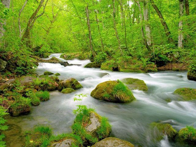 ホテルの裏手には美しい渓流!天気の良い日は渓流散策をお楽しみ下さいませ♪
