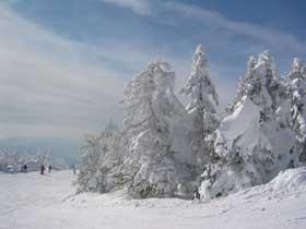 ハチ高原は関西最大級〜!!ゲレンデがすぐなので滑るに行くのも楽チンです!!!