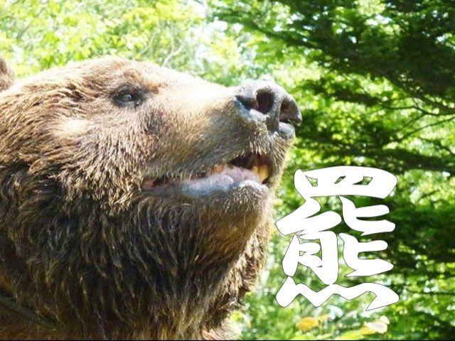 北海道の原風景を体験できる場所、十勝サホロリゾート!!