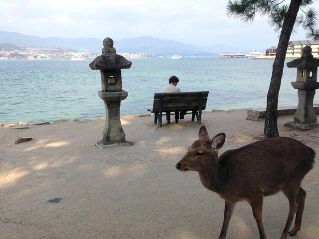 鹿も宮島の風物です。