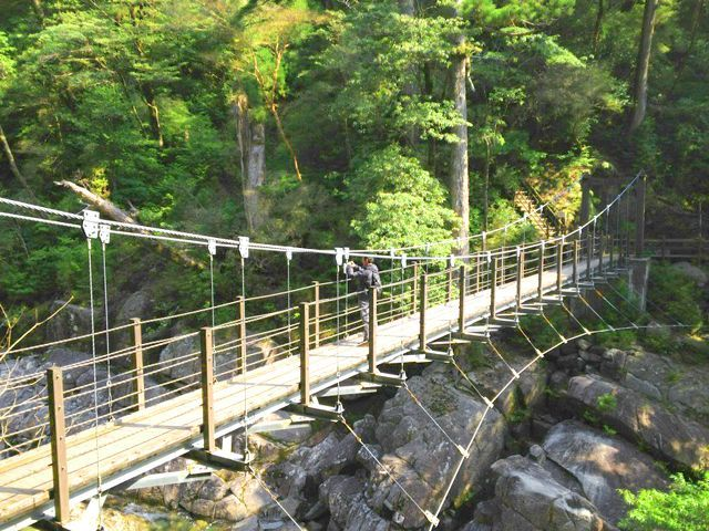 行ってみたい離島!屋久島でのお仕事が出ました。休みの日にトレッキングで縄文杉までGO!