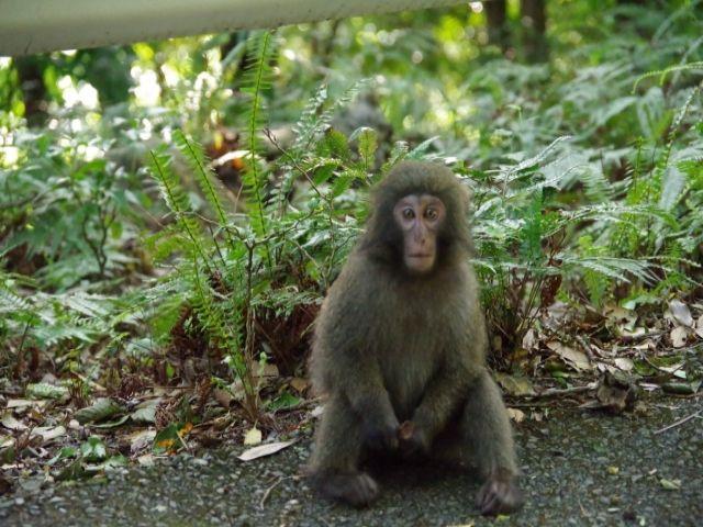 大自然アリ!西部林道には猿やしかも出現!!私は猿を何匹も見ましたよ☆