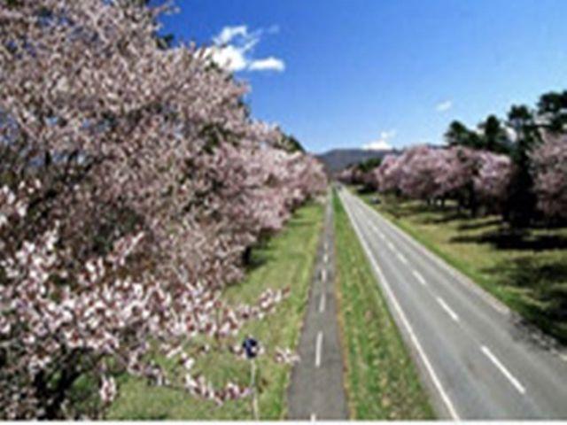 日本の道100選にも選ばれた桜で有名な二十間道路のある町です(´^ω^`)