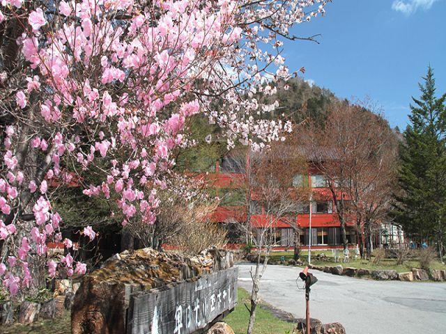 春は桜☆山が色鮮やかになります!