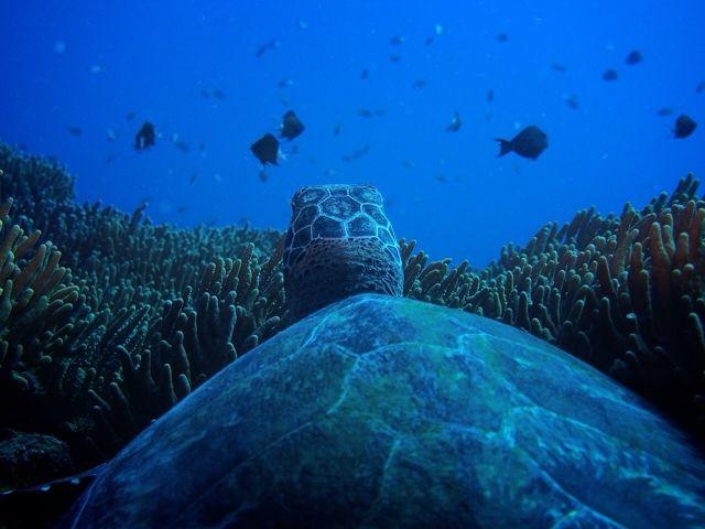 ウミガメと泳ぐのも夢じゃありません!!!