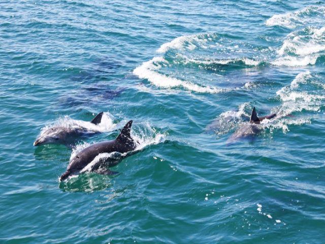 船で10分程度で「イルカ島」と呼ばれる隠れた観光名所があります!!