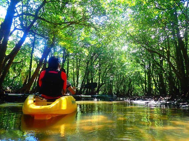 八重山のマングローブジャングルをカヌーでススム。大人気ツアーのガイドに挑戦!