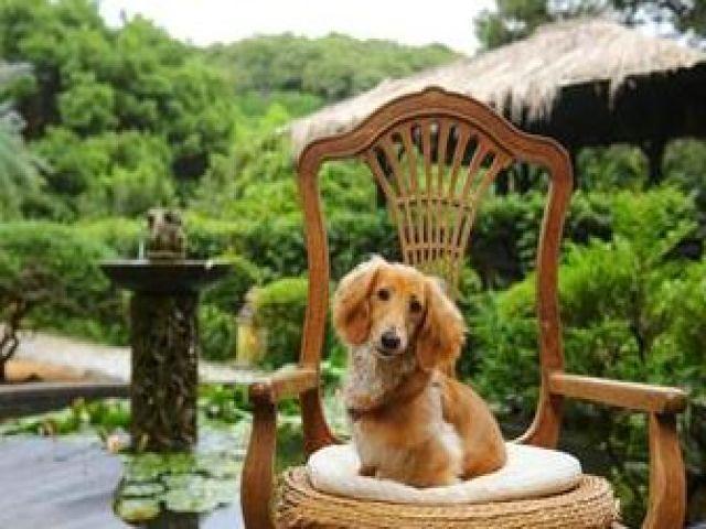 ペット同伴可のホテルだからいらっしゃるお客様は愛犬家の方がたくさん☆