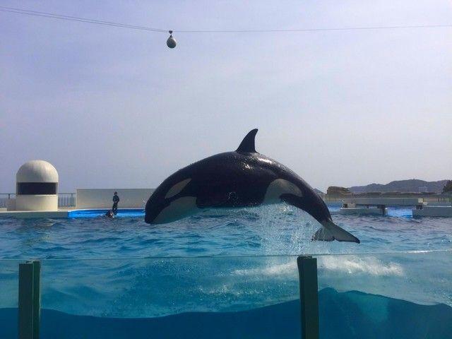 同エリアには関東地区で有名な水族館があります♪