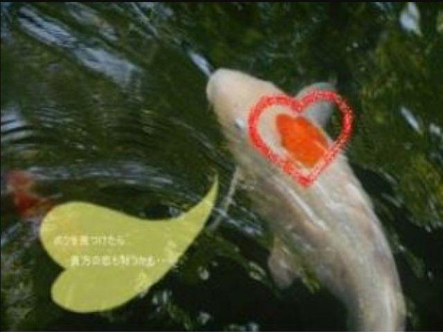 館内の池にはたくさんの鯉が泳いでいます!