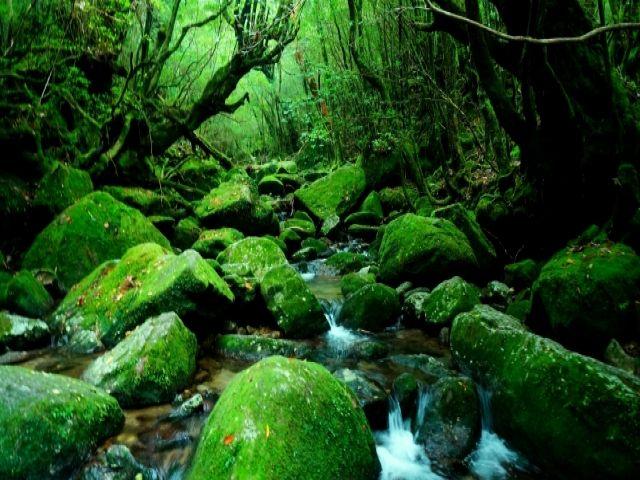 大自然溢れる屋久島でのセラピストのお仕事!