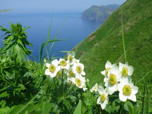 「花の浮島」礼文島♪