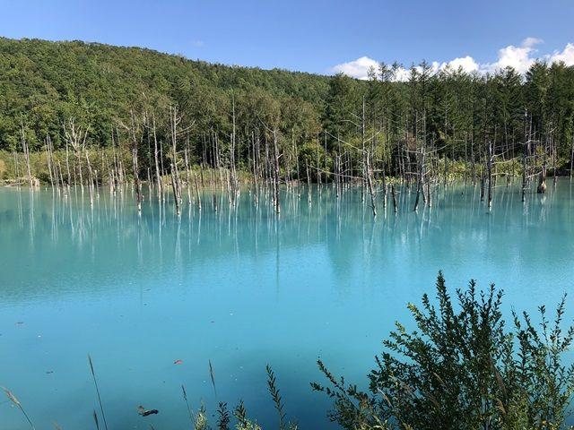 徒歩圏内にある『青い池』目を奪われる神秘的な光景が広がります!!!
