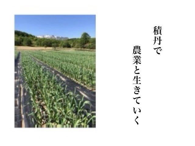 積丹の壮大な山や自然に囲まれて栽培作業ができます。
