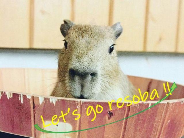 観光名所たくさん☆彡今年の夏は那須へレッツゴー!!